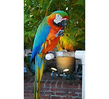 Macaw on Front Street., Lahaina Photographic Print