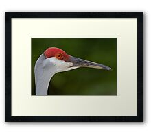 Tiny Red Feathers Framed Print