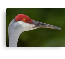Tiny Red Feathers Canvas Print
