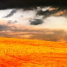 Field at Sunset by clizzio