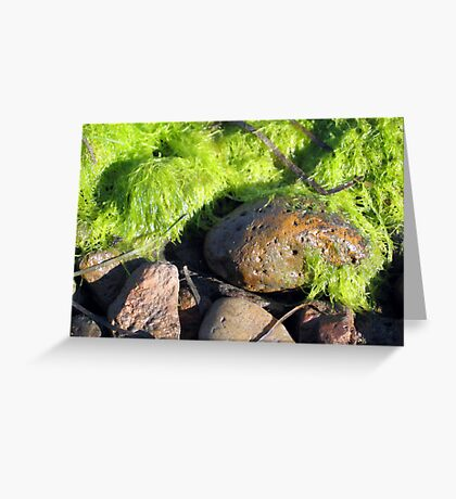 Pebble and Moss Texture Greeting Card