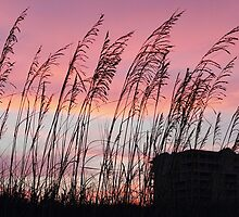 Sunset at the Beach by Carol Bailey White