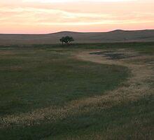 Dawn in Bel Fourche, South Dakota by Elizabeth English