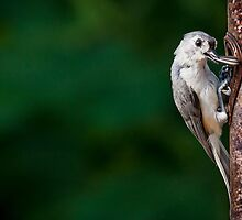 small bird, big appetite by auroreye