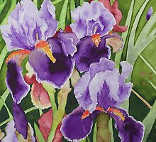 Bearded Irises by Julie Myers