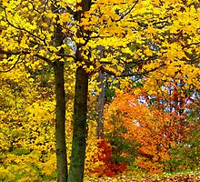 Gold of Autumn by Lisa G. Putman