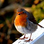 Early morning visitor by Photography by Mathilde