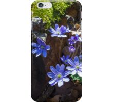 Blue Kidneywort Flowers iPhone Case/Skin
