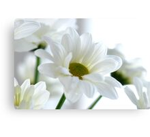 Glowing white Daisies Canvas Print