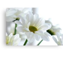 Glowing white Daisies Canvas Print