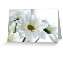Glowing white Daisies Greeting Card