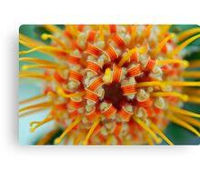 Orange Pincushion Protea Centre Canvas Print