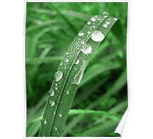 Morning Grass... Poster