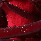 Black Velvet by AngieBel