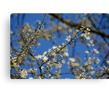 Spring is Coming! Canvas Print