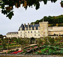 Villandry Castle - Loire Valley - France by Alison Cornford-Matheson