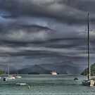 A Lion in a Storm at Picton. by Larry Lingard-Davis