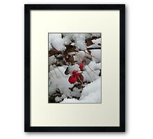 twig and berries...(not those, you sillies) Framed Print