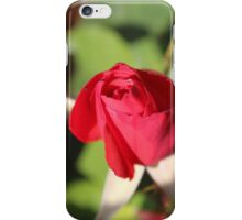 Red Rose Bud iPhone Case/Skin