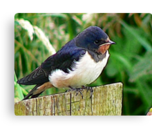 The Swallow Canvas Print