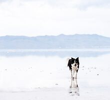 Salty Border Collie by Brent Olson