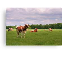 Hi Cow! Canvas Print