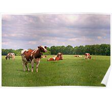Hi Cow! Poster