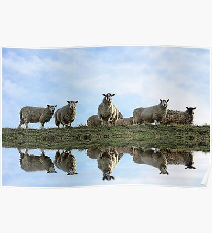 Flock Reflections Poster