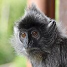 Silver Leaf Monkey by Photography  by Mathilde