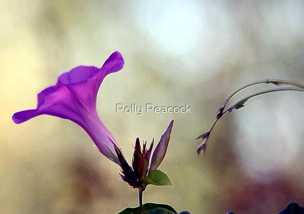 Flowering Vines by Polly Peacock