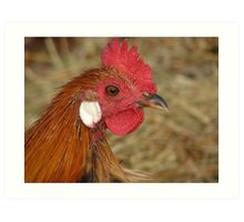 Rare Breed Rooster Art Print