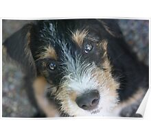 NW Farm Terrier Poster