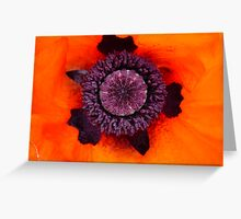 A Poppy's Insides Greeting Card