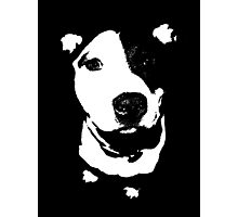 Louie - Black and white pit bull Photographic Print