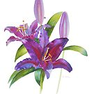 Firebolt Lily Watercolor by Pat Yager