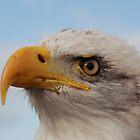 Bald Eagle by woolcos