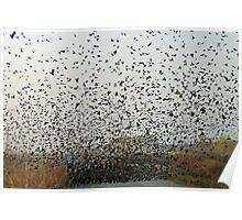 a tornado of Tri-Coloured Black Birds Poster