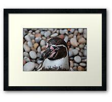 Penguin in Paradise Framed Print