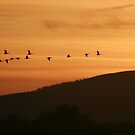 Barmekin Hill with Geese flying past by Suzanne Forbes-Murray