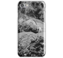 Lounging Lion iPhone Case/Skin