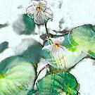 Violets by vigor