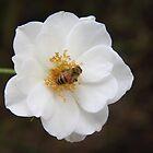 bee at work by elladoor
