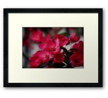 Dreamy Blossoms Framed Print