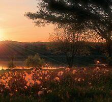 Dandelion Fields Forever by Megan Noble
