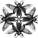 Moth-man Prophecies by huliodoyle