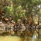 Wilpena Creek by Pamela Inverarity