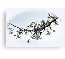 Blooming Branch In A Rain Canvas Print