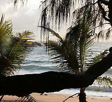 Branch & Light 2008 by sunism