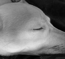 SLEEPING BEAUTY by Princess1222