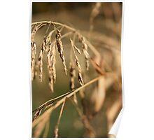 Grains 3 Poster